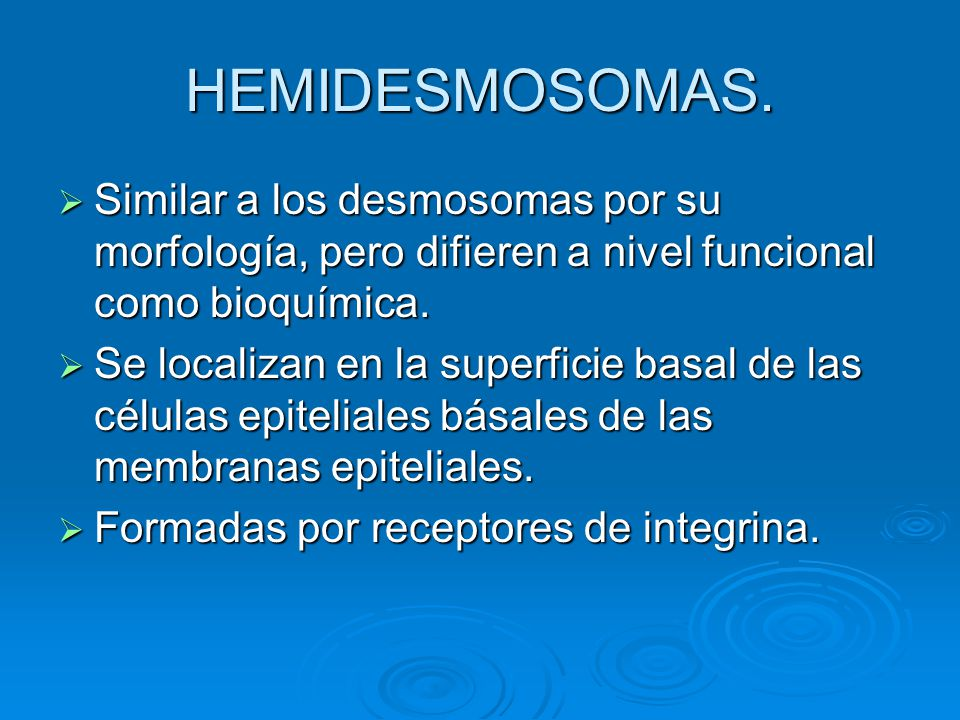 HEMIDESMOSOMAS. Similar a los desmosomas por su morfología, pero difieren a nivel funcional como bioquímica. Similar a los desmosomas por su morfologí