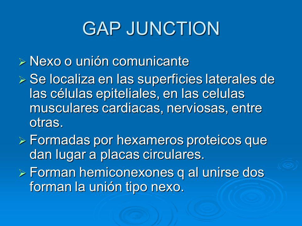 GAP JUNCTION Nexo o unión comunicante Nexo o unión comunicante Se localiza en las superficies laterales de las células epiteliales, en las celulas mus