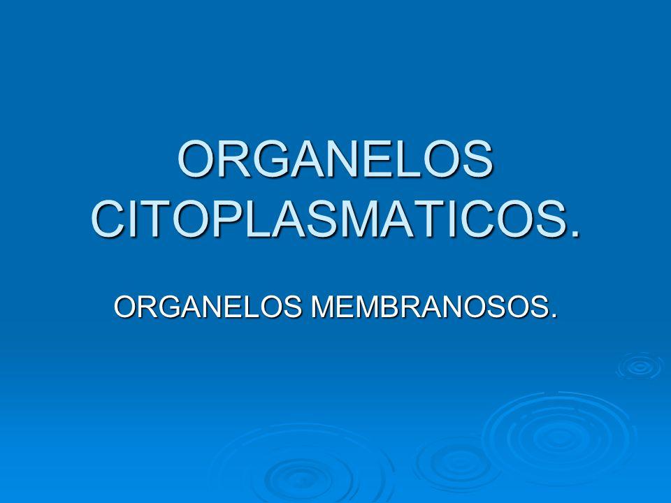 ORGANELOS CITOPLASMATICOS. ORGANELOS MEMBRANOSOS.