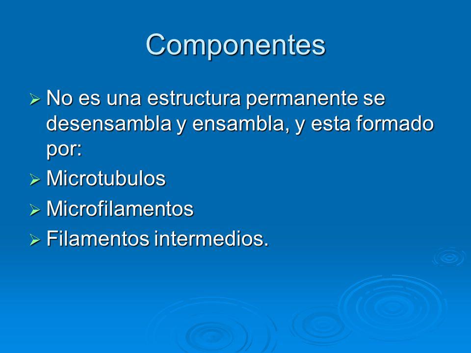 Filamentos intermedios Formados por proteínas fibrosas, estables y poco solubles.