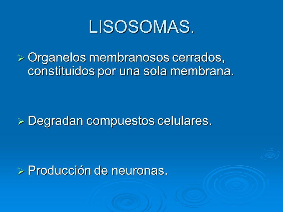 LISOSOMAS. Organelos membranosos cerrados, constituidos por una sola membrana. Organelos membranosos cerrados, constituidos por una sola membrana. Deg