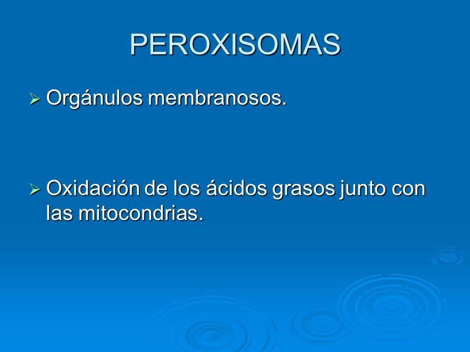 PEROXISOMAS Orgánulos membranosos. Orgánulos membranosos. Oxidación de los ácidos grasos junto con las mitocondrias. Oxidación de los ácidos grasos ju
