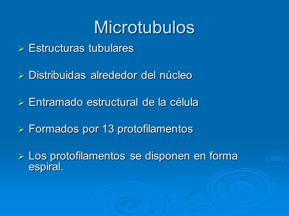 Microtubulos Estructuras tubulares Estructuras tubulares Distribuidas alrededor del núcleo Distribuidas alrededor del núcleo Entramado estructural de