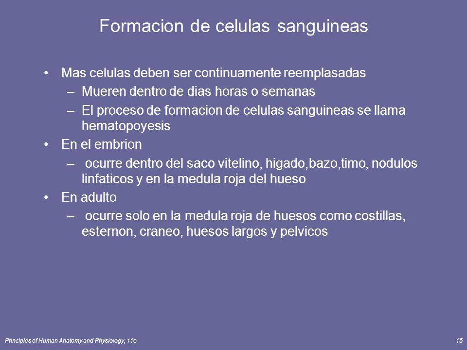Principles of Human Anatomy and Physiology, 11e15 Formacion de celulas sanguineas Mas celulas deben ser continuamente reemplasadas –Mueren dentro de d