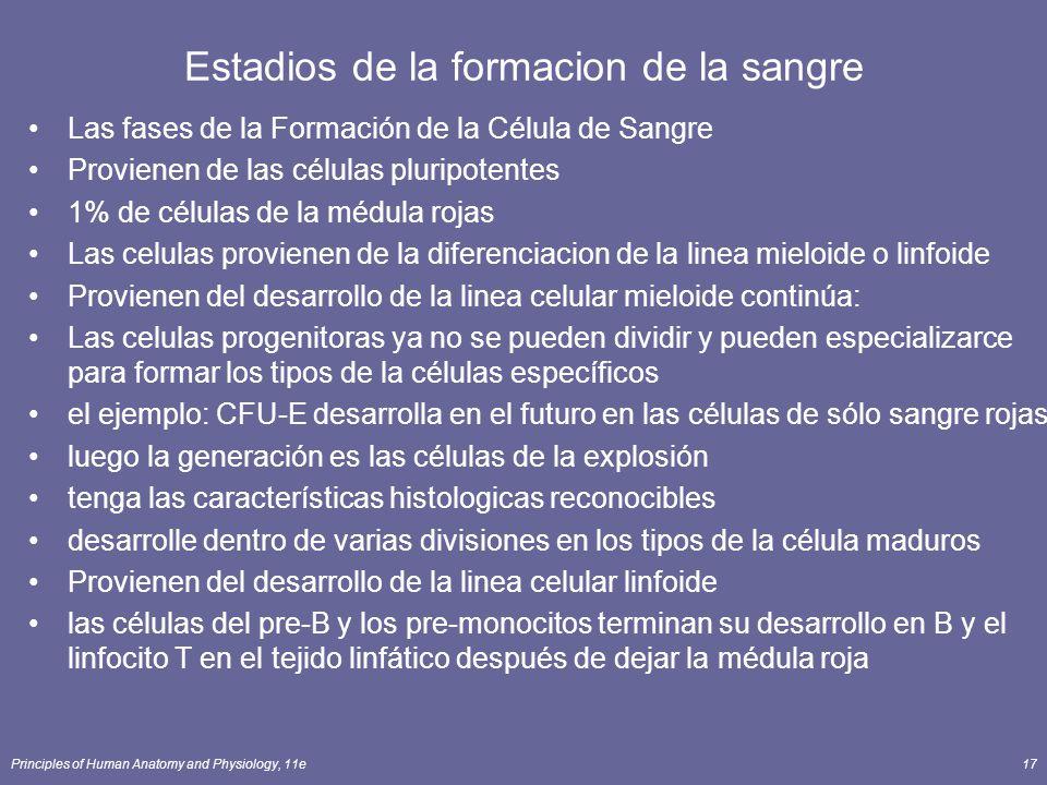 Principles of Human Anatomy and Physiology, 11e17 Estadios de la formacion de la sangre Las fases de la Formación de la Célula de Sangre Provienen de