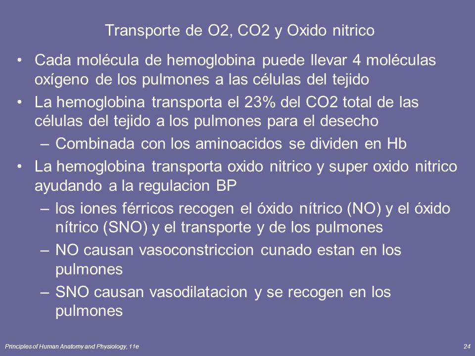 Principles of Human Anatomy and Physiology, 11e24 Transporte de O2, CO2 y Oxido nitrico Cada molécula de hemoglobina puede llevar 4 moléculas oxígeno