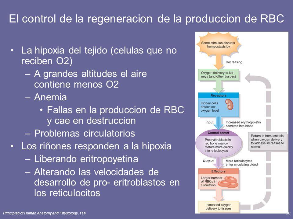Principles of Human Anatomy and Physiology, 11e30 El control de la regeneracion de la produccion de RBC La hipoxia del tejido (celulas que no reciben