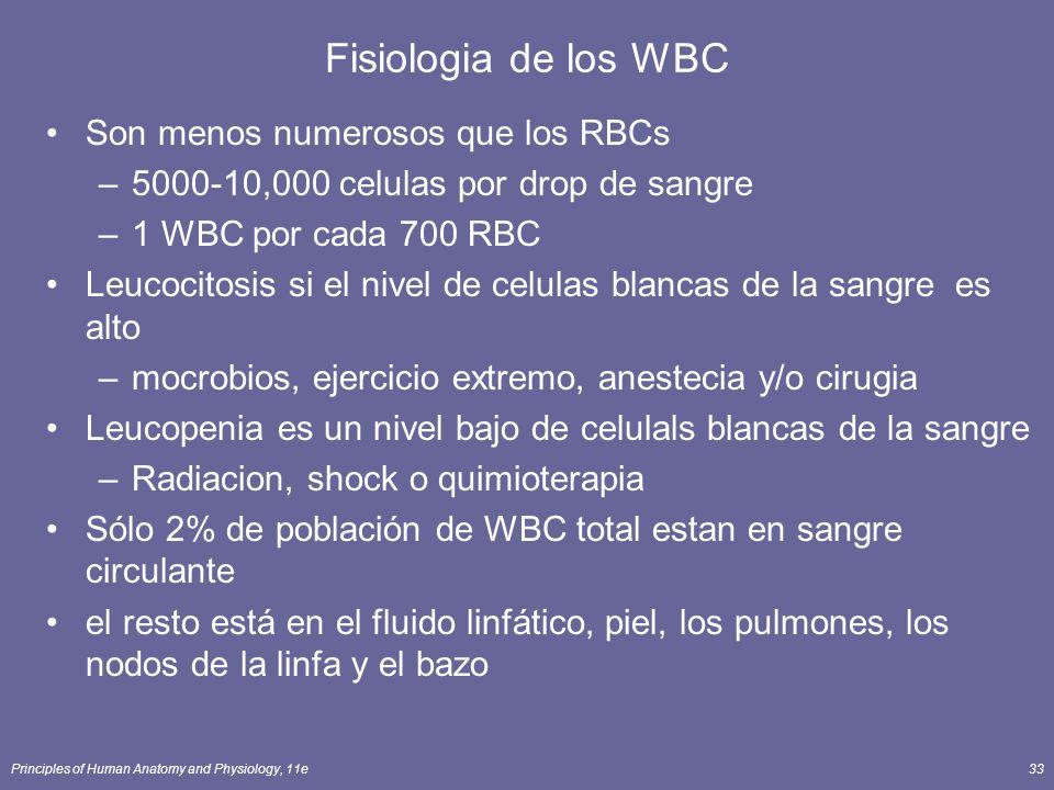 Principles of Human Anatomy and Physiology, 11e33 Fisiologia de los WBC Son menos numerosos que los RBCs –5000-10,000 celulas por drop de sangre –1 WB