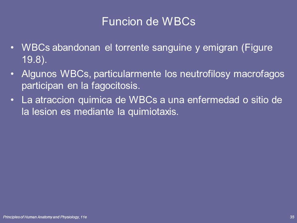 Principles of Human Anatomy and Physiology, 11e35 Funcion de WBCs WBCs abandonan el torrente sanguine y emigran (Figure 19.8). Algunos WBCs, particula