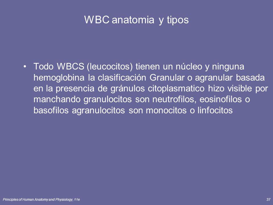 Principles of Human Anatomy and Physiology, 11e37 WBC anatomia y tipos Todo WBCS (leucocitos) tienen un núcleo y ninguna hemoglobina la clasificación