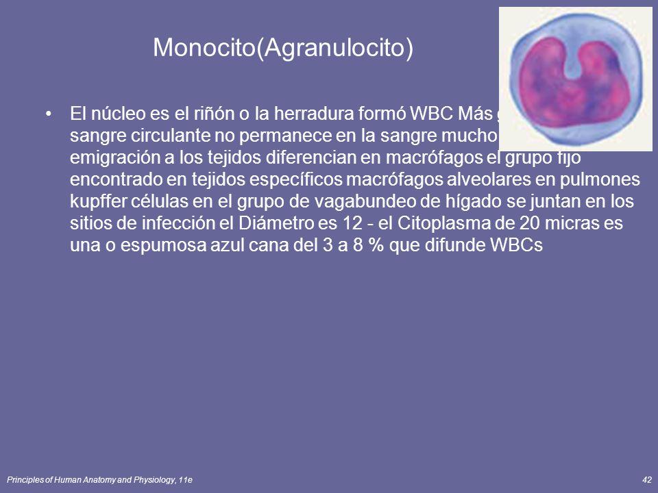 Principles of Human Anatomy and Physiology, 11e42 Monocito(Agranulocito) El núcleo es el riñón o la herradura formó WBC Más grande en la sangre circul
