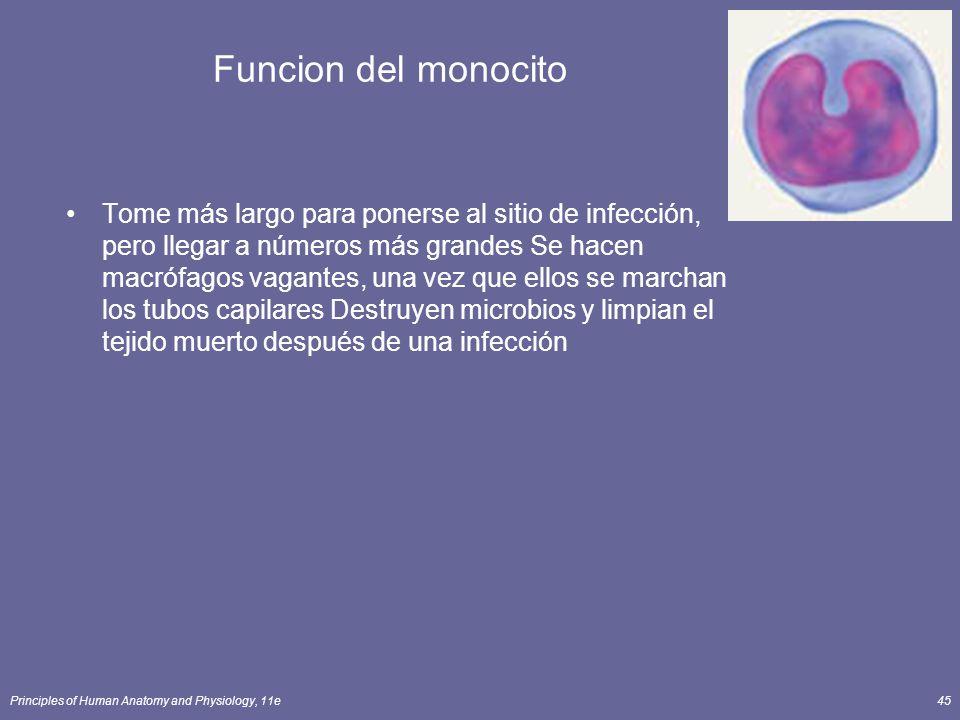 Principles of Human Anatomy and Physiology, 11e45 Funcion del monocito Tome más largo para ponerse al sitio de infección, pero llegar a números más gr