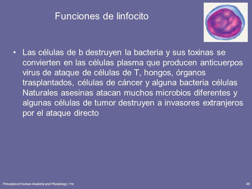 Principles of Human Anatomy and Physiology, 11e48 Funciones de linfocito Las células de b destruyen la bacteria y sus toxinas se convierten en las cél