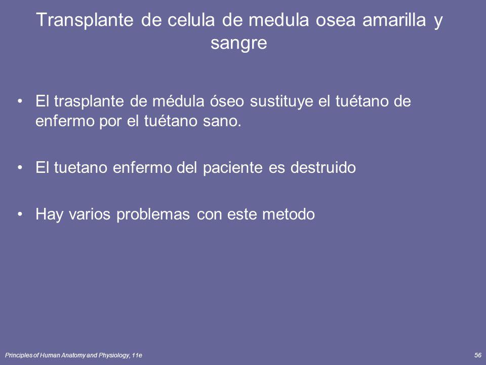 Principles of Human Anatomy and Physiology, 11e56 Transplante de celula de medula osea amarilla y sangre El trasplante de médula óseo sustituye el tué