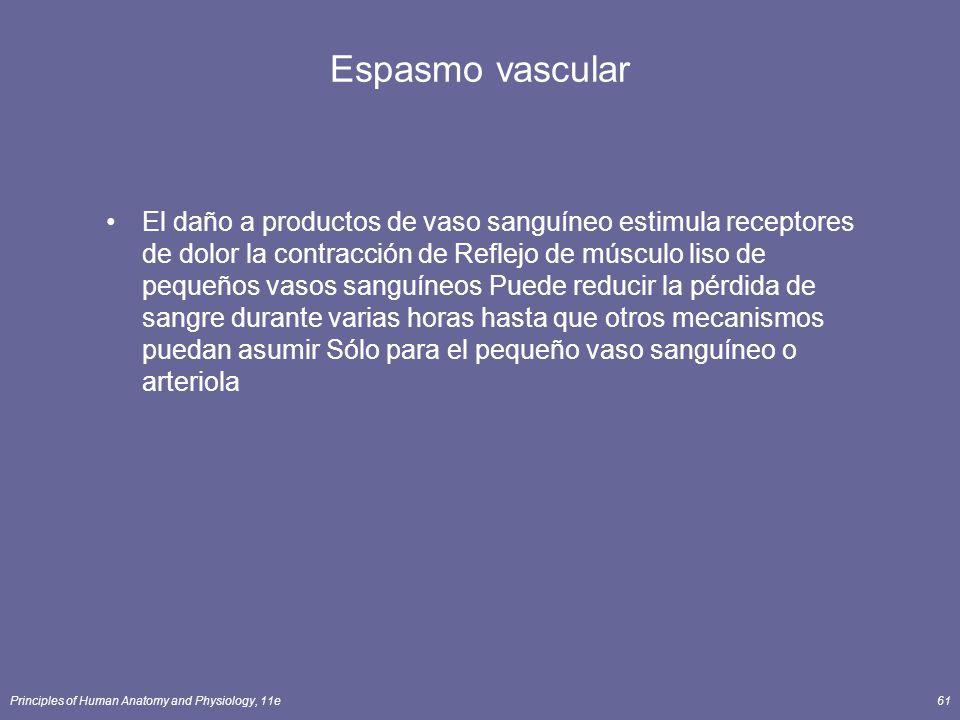 Principles of Human Anatomy and Physiology, 11e61 Espasmo vascular El daño a productos de vaso sanguíneo estimula receptores de dolor la contracción d