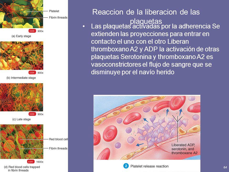 Principles of Human Anatomy and Physiology, 11e64 Reaccion de la liberacion de las plaquetas Las plaquetas activadas por la adherencia Se extienden la