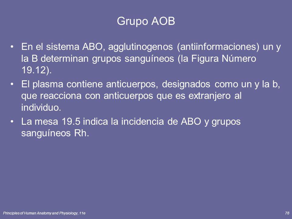Principles of Human Anatomy and Physiology, 11e78 Grupo AOB En el sistema ABO, agglutinogenos (antiinformaciones) un y la B determinan grupos sanguíne