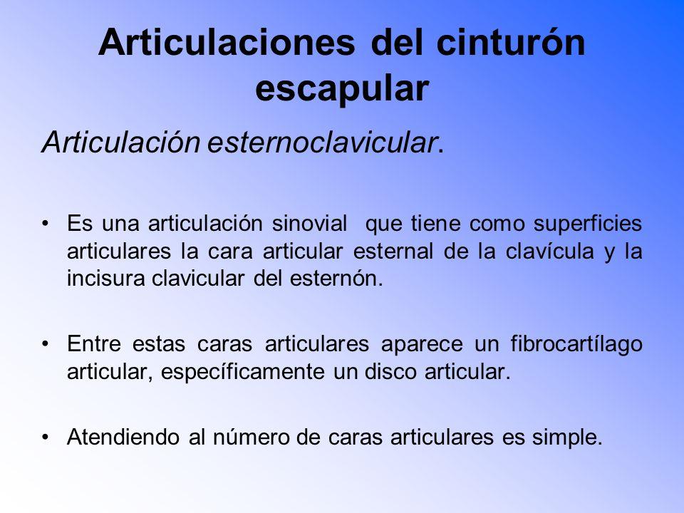 Articulaciones del cinturón escapular Articulación esternoclavicular.