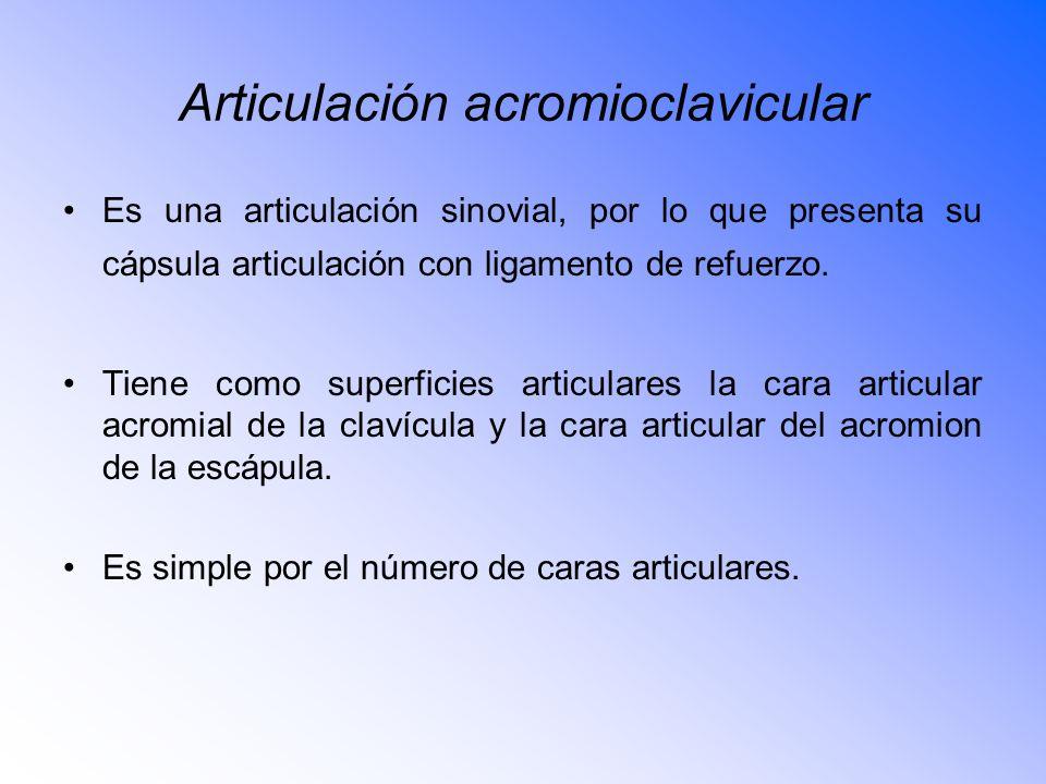 Articulación acromioclavicular Es una articulación sinovial, por lo que presenta su cápsula articulación con ligamento de refuerzo.