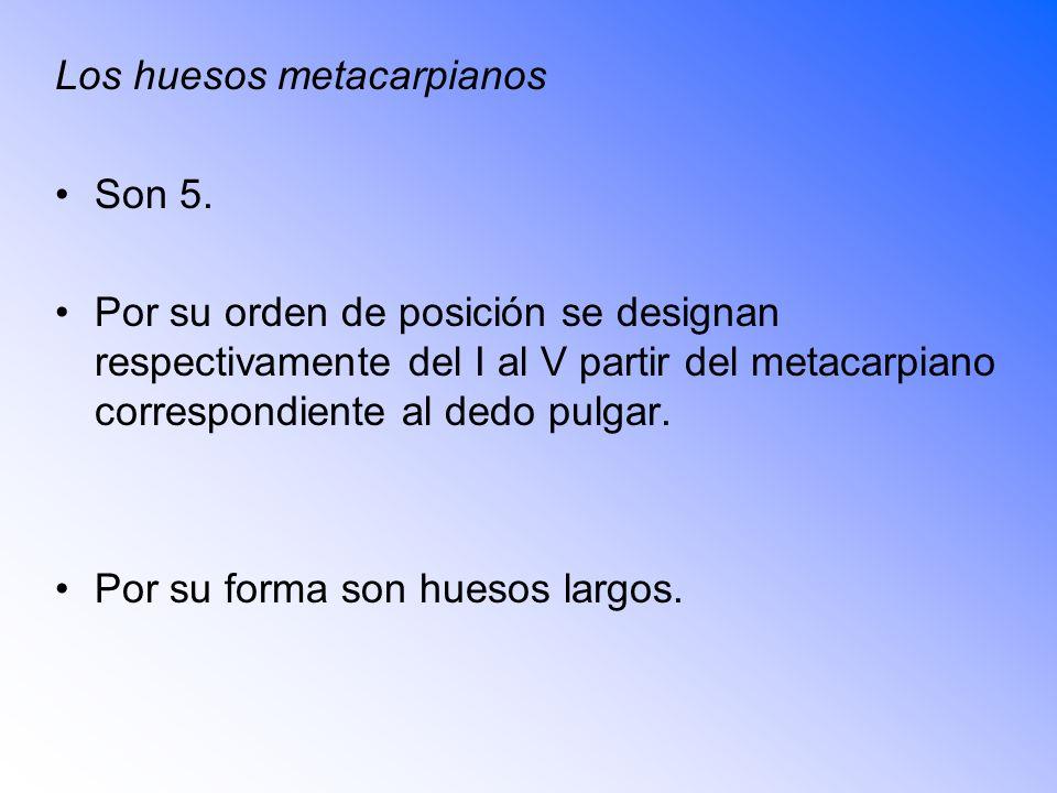 Los huesos metacarpianos Son 5.