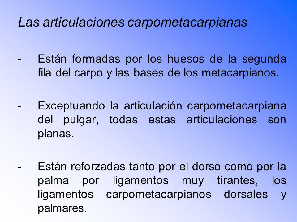 Las articulaciones carpometacarpianas -Están formadas por los huesos de la segunda fila del carpo y las bases de los metacarpianos.
