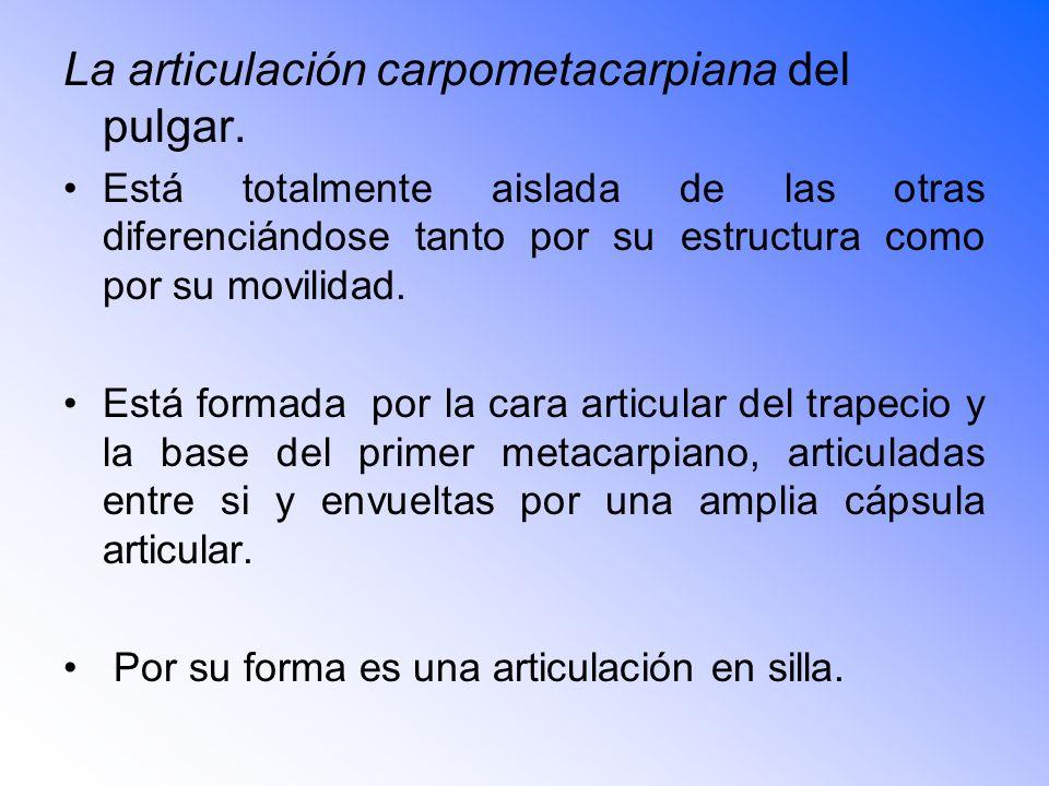 La articulación carpometacarpiana del pulgar.