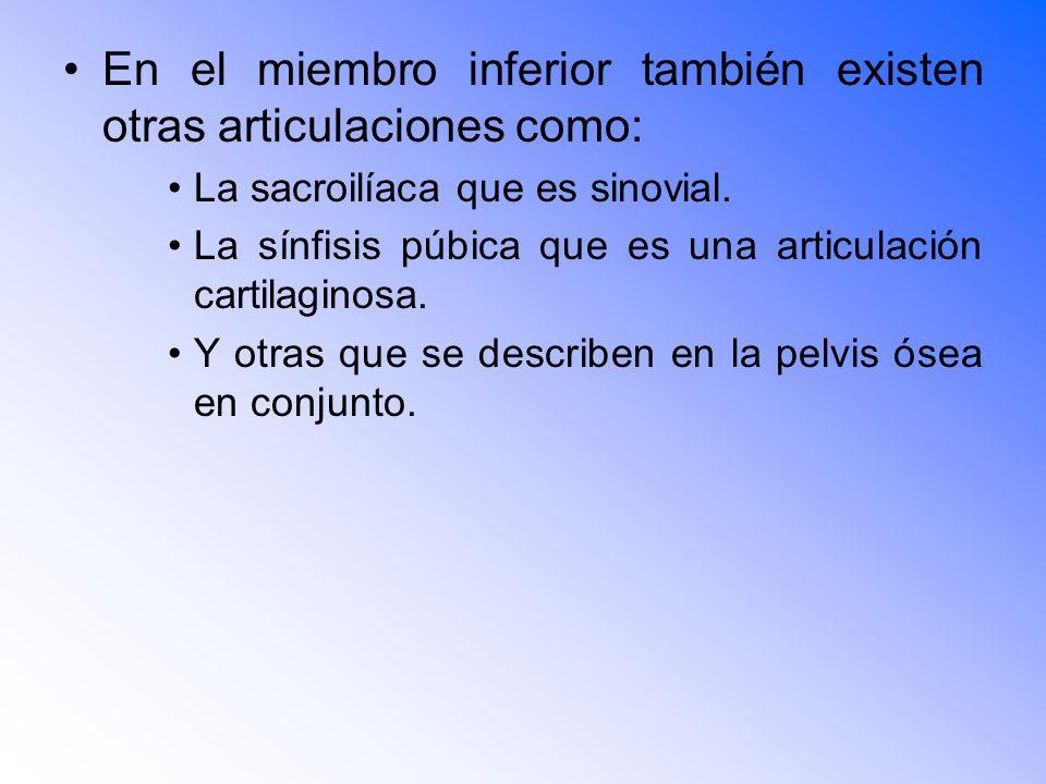 En el miembro inferior también existen otras articulaciones como: La sacroilíaca que es sinovial.