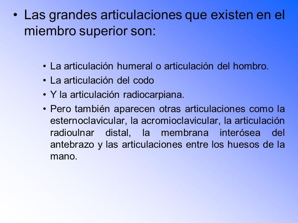 Las grandes articulaciones que existen en el miembro superior son: La articulación humeral o articulación del hombro.