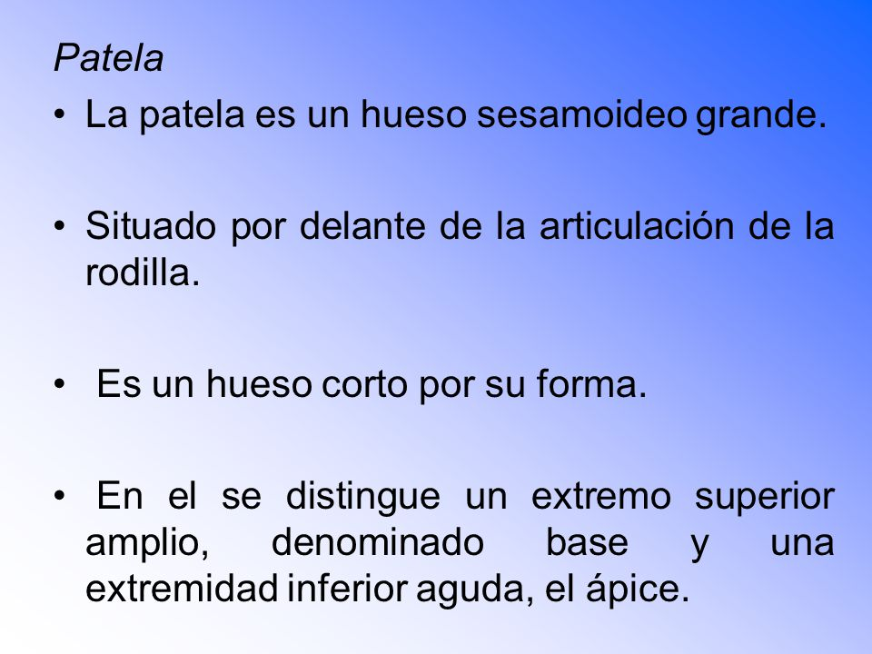 Patela La patela es un hueso sesamoideo grande.
