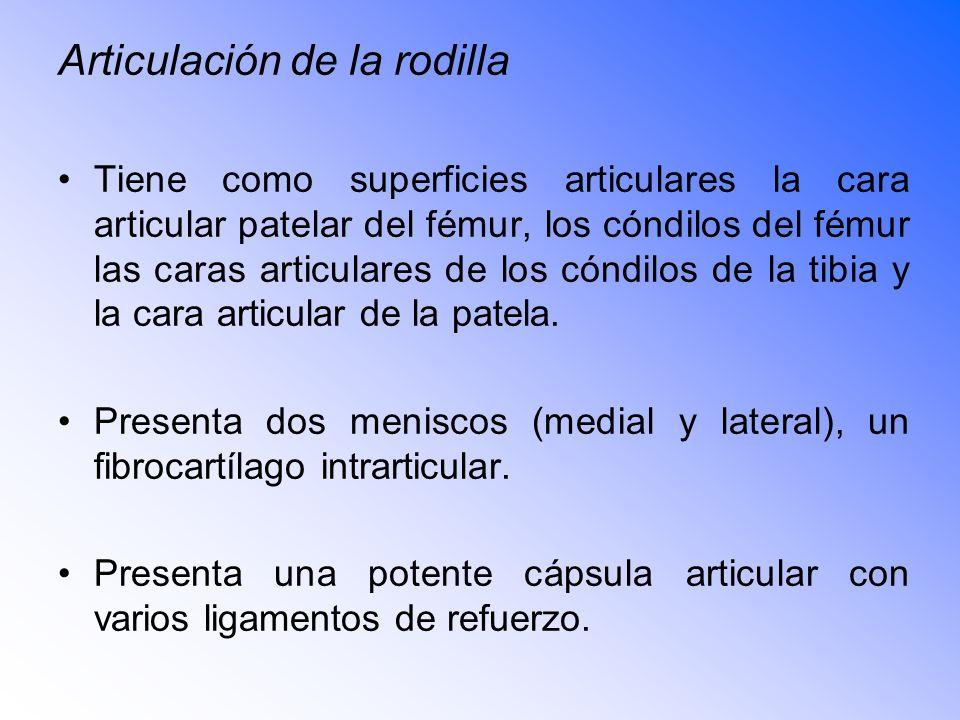 Articulación de la rodilla Tiene como superficies articulares la cara articular patelar del fémur, los cóndilos del fémur las caras articulares de los cóndilos de la tibia y la cara articular de la patela.