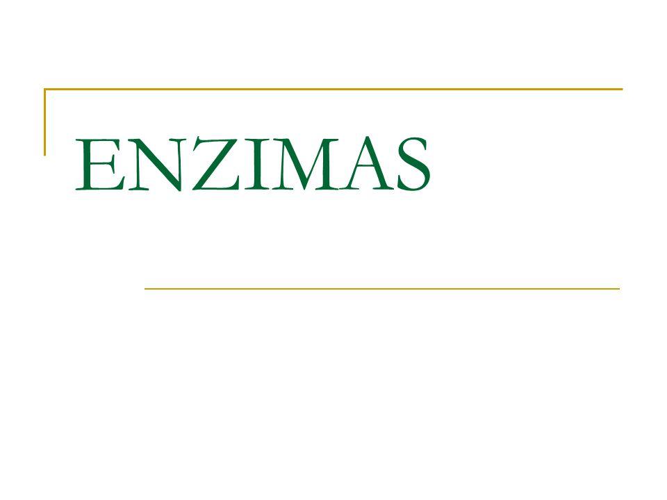Definición En las células vivientes la mayoría de los catalizadores son moléculas proteicas denominadas ENZIMAS.