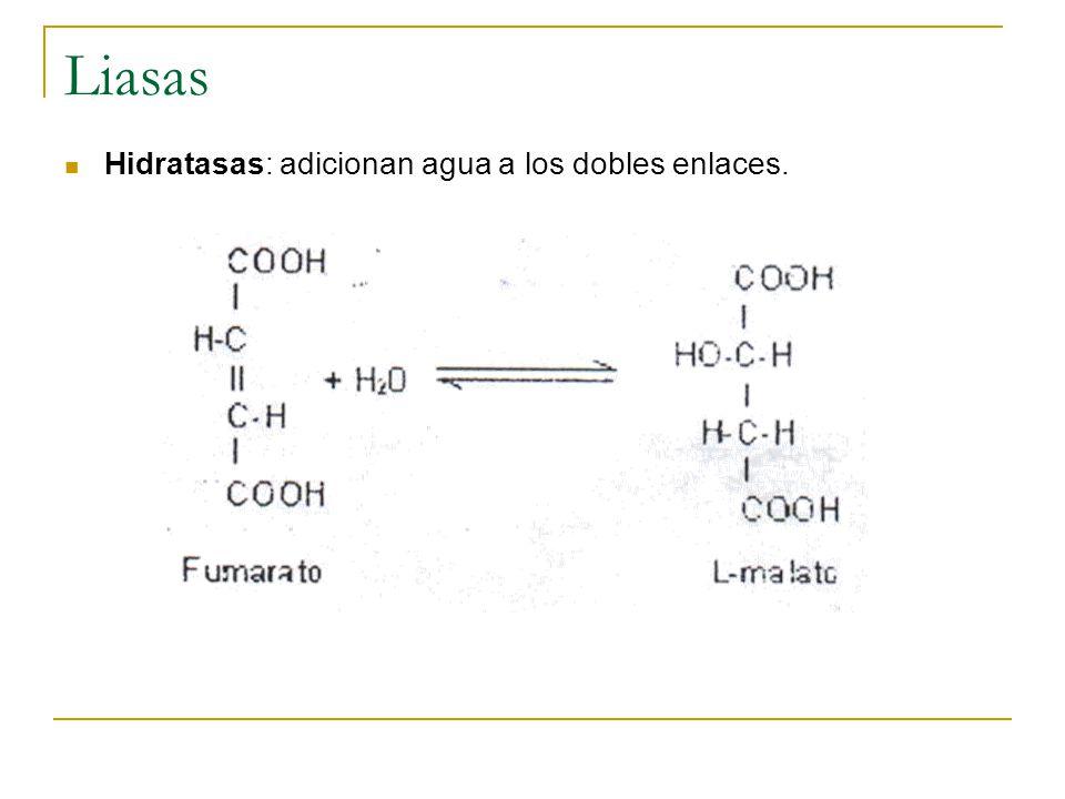 Liasas Hidratasas: adicionan agua a los dobles enlaces.