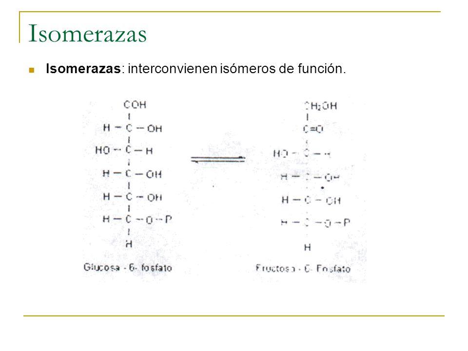 Isomerazas Isomerazas: interconvienen isómeros de función.