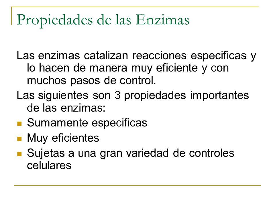 Propiedades de las Enzimas Las enzimas catalizan reacciones especificas y lo hacen de manera muy eficiente y con muchos pasos de control. Las siguient