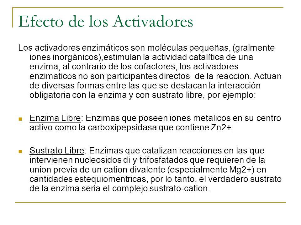 Efecto de los Activadores Los activadores enzimáticos son moléculas pequeñas, (gralmente iones inorgánicos),estimulan la actividad catalítica de una e