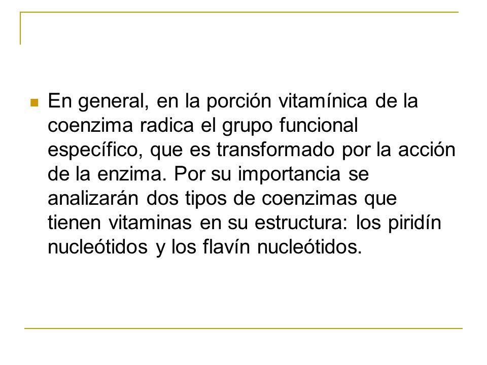 En general, en la porción vitamínica de la coenzima radica el grupo funcional específico, que es transformado por la acción de la enzima. Por su impor