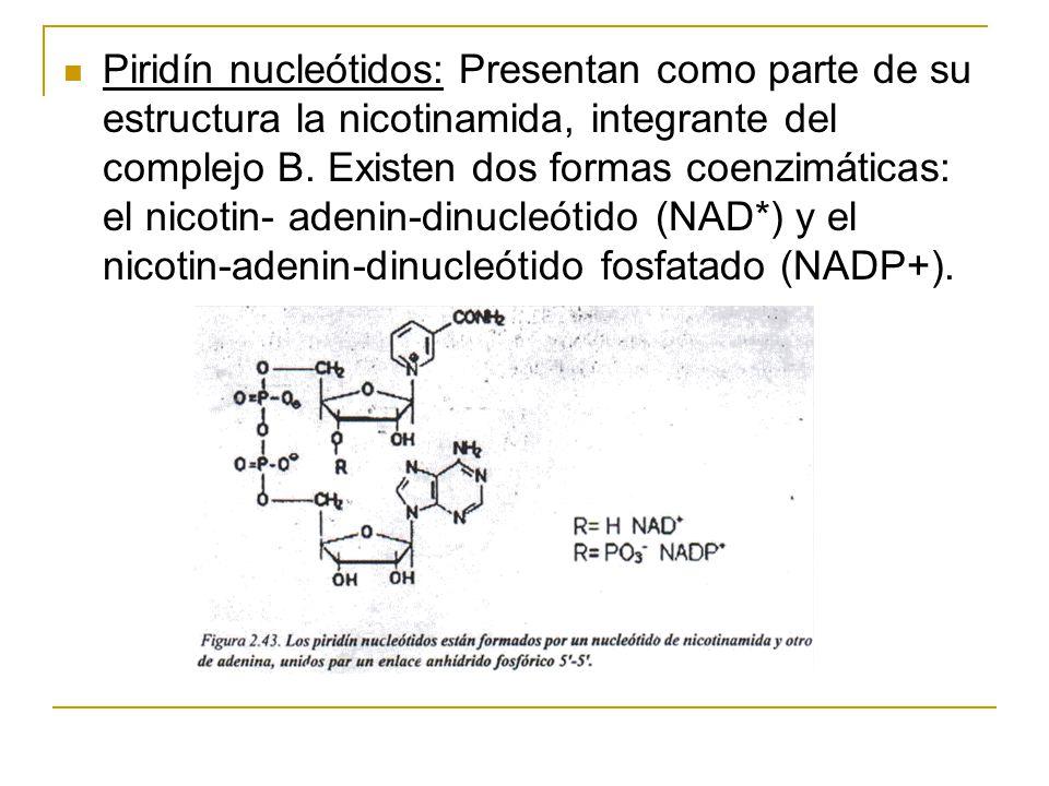 Piridín nucleótidos: Presentan como parte de su estructura la nicotinamida, integrante del complejo B. Existen dos formas coenzimáticas: el nicotin- a