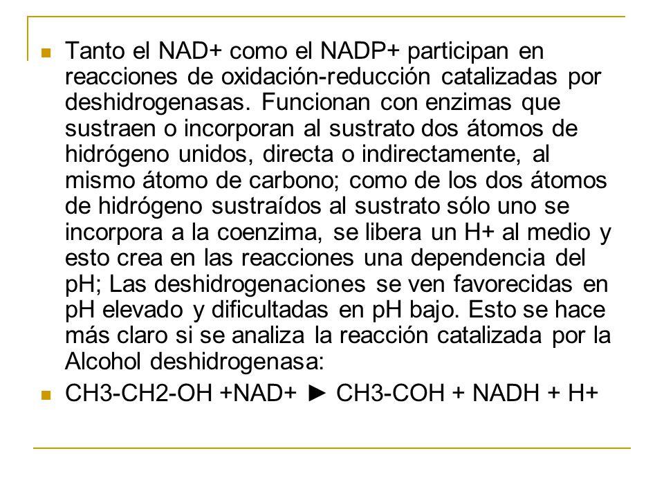 Tanto el NAD+ como el NADP+ participan en reacciones de oxidación-reducción catalizadas por deshidrogenasas. Funcionan con enzimas que sustraen o inco