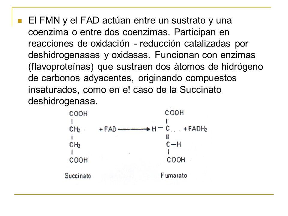 El FMN y el FAD actúan entre un sustrato y una coenzima o entre dos coenzimas. Participan en reacciones de oxidación - reducción catalizadas por deshi