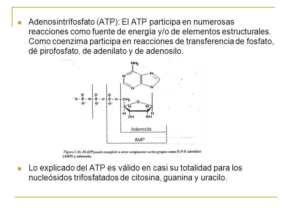 Adenosintrífosfato (ATP): El ATP participa en numerosas reacciones como fuente de energía y/o de elementos estructurales. Como coenzima participa en r