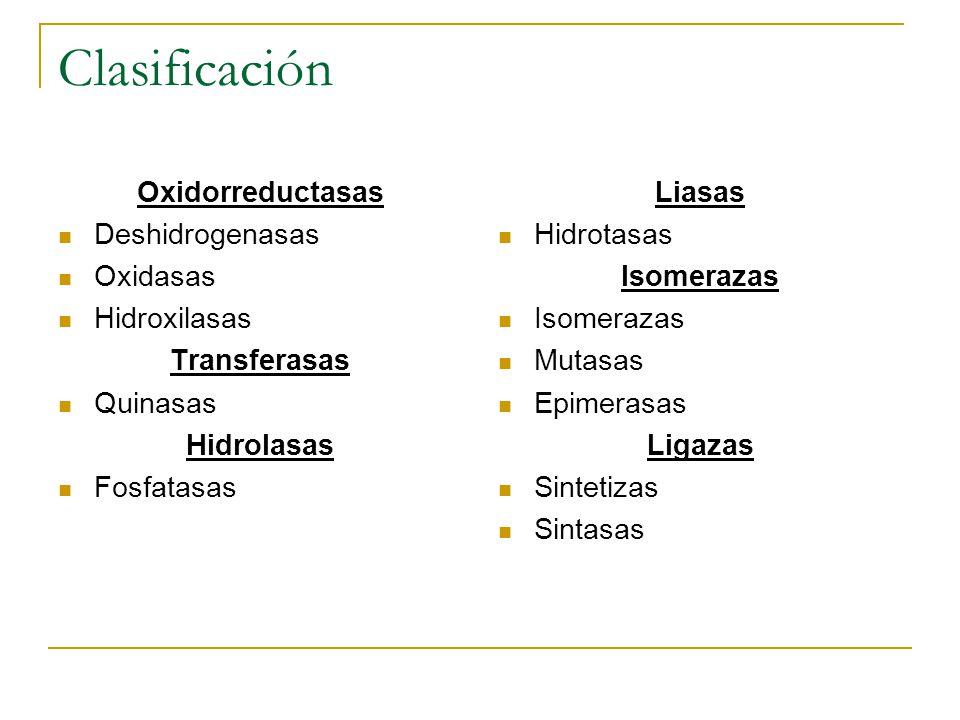 Clasificación Oxidorreductasas Deshidrogenasas Oxidasas Hidroxilasas Transferasas Quinasas Hidrolasas Fosfatasas Liasas Hidrotasas Isomerazas Mutasas