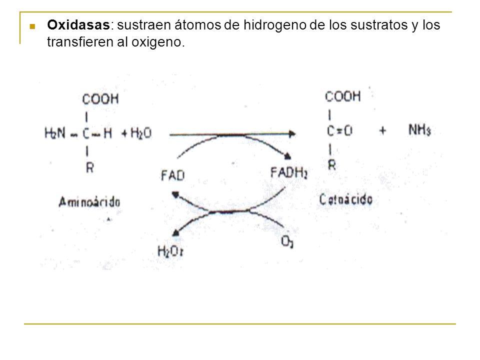 Adenosintrífosfato (ATP): El ATP participa en numerosas reacciones como fuente de energía y/o de elementos estructurales.