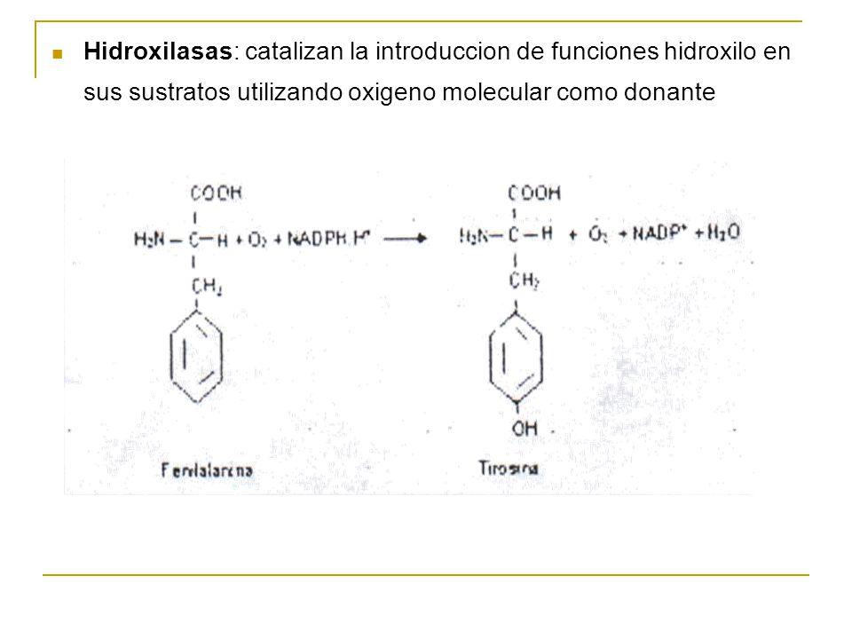 Hidroxilasas: catalizan la introduccion de funciones hidroxilo en sus sustratos utilizando oxigeno molecular como donante