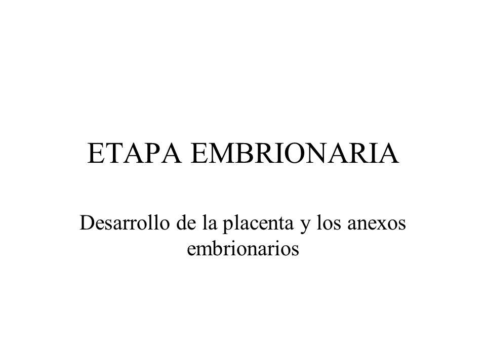 ETAPA EMBRIONARIA Desarrollo de la placenta y los anexos embrionarios