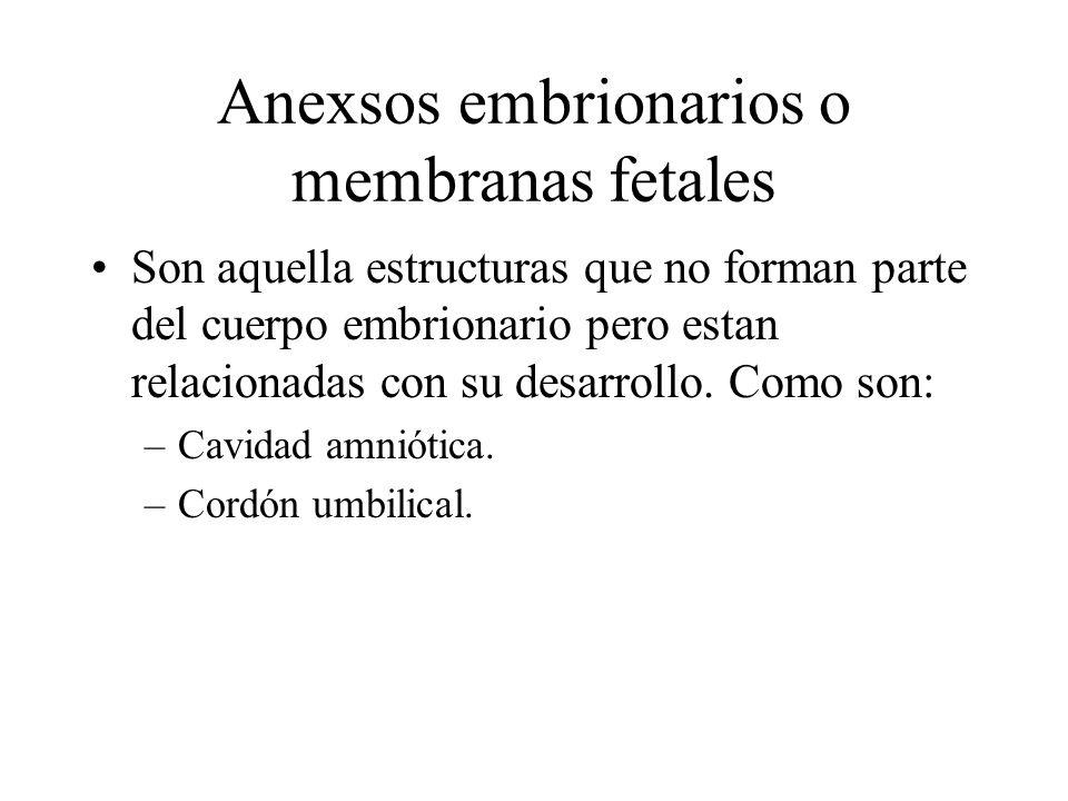 Anexsos embrionarios o membranas fetales Son aquella estructuras que no forman parte del cuerpo embrionario pero estan relacionadas con su desarrollo.