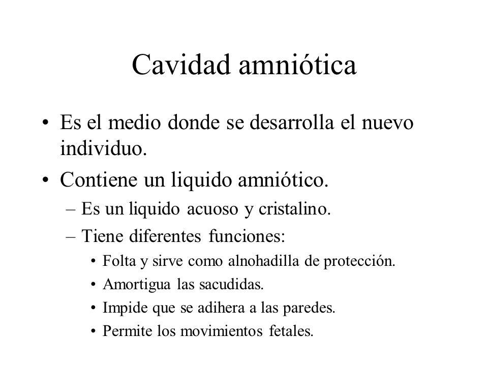 Cavidad amniótica Es el medio donde se desarrolla el nuevo individuo. Contiene un liquido amniótico. –Es un liquido acuoso y cristalino. –Tiene difere
