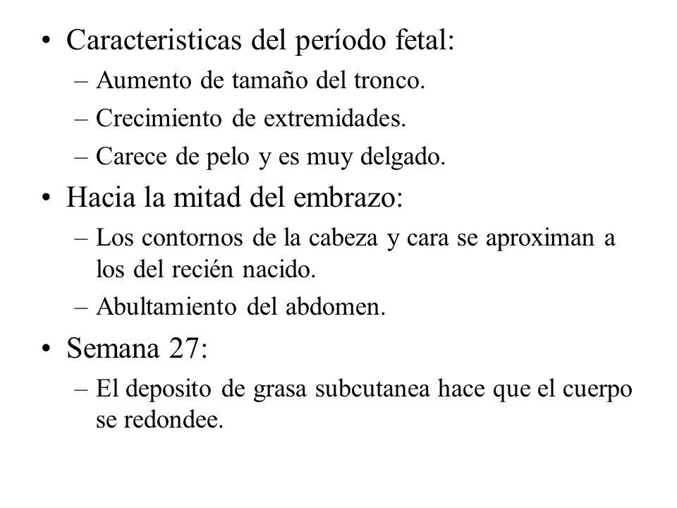 Caracteristicas del período fetal: –Aumento de tamaño del tronco. –Crecimiento de extremidades. –Carece de pelo y es muy delgado. Hacia la mitad del e