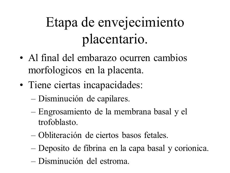 Etapa de envejecimiento placentario. Al final del embarazo ocurren cambios morfologicos en la placenta. Tiene ciertas incapacidades: –Disminución de c