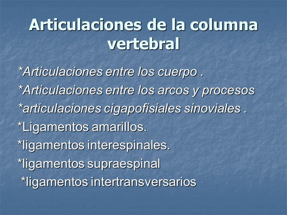 Articulaciones de la columna vertebral *Articulaciones entre los cuerpo.