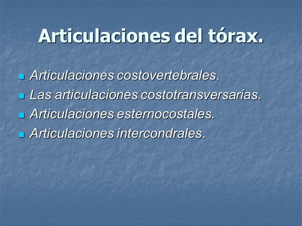 Articulaciones del tórax.Articulaciones costovertebrales.